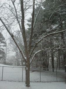 snow2015-2