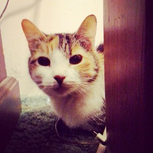 """My dad's cat, Willow. She's great at hiding, but my daughter can always find her. She greets her with an excited, """"Hi, Willow!"""" Then gives her a gentle pat and leaves her alone for the rest of our visit with my parents."""